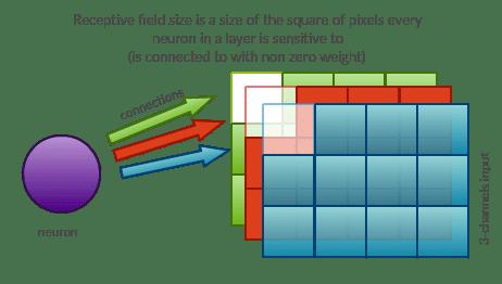 Receptive field (3)